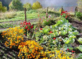 Flower and Vegetable garden at <b>Taverna di Bibbiano</b>